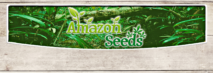 Amazon Seeds - Ginseng Panax In Polvere Biologico - IAFSTORE.COM