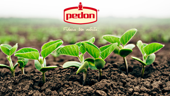Pedon - Easyglut - Gluten-Free Powder Mix For Cakes - IAFSTORE.COM